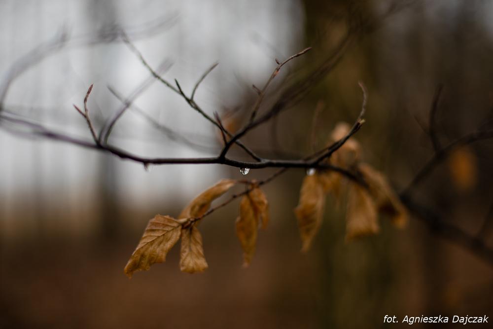 Fot Robert Dajczak  8537
